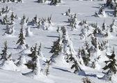 Achtergrond van winter bomen. natuurlijke winterlandschap — Stockfoto