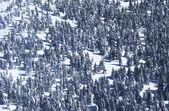 Bomen onder de sneeuw in de wintertijd. — Stockfoto