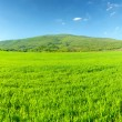 Green meadow in mountain valley — Stock Photo