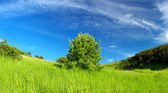 Tree in the summer field — Stock Photo