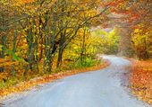 Way in bright autumn forest — Stockfoto