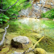 Stones and creek in bright green forest — Stock Photo