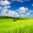 Rural scene with grass and clouds — Stock Photo