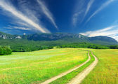 Rural road on field — Stock Photo