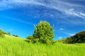 Tree and bright green grass — Стоковое фото