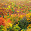 Bright autumn woods — Stock Photo
