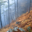 Mist in autumn forest — Stock Photo