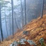 Mist in autumn forest — Stock Photo