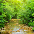 River deep in mountain forest — Stock Photo #36975377