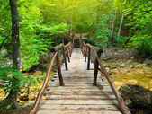 Bridge in bright forest — Stock Photo