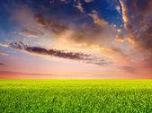 Prado y un cielo con nubes luminosas — Foto de Stock