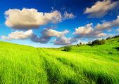 Weide en hemel met heldere wolken — Stockfoto