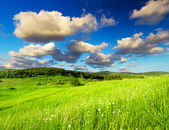 Meadow and sky with bright clouds — Стоковое фото