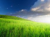 Campo y cielo nublado — Foto de Stock