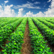 Stock Photo: Agricultural landscape
