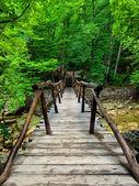 Wooden bridge in green forest. — Stock Photo