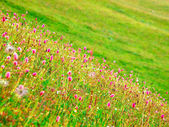 Bright flowers on green meadow — Stock Photo