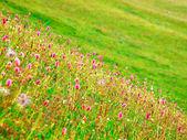 Flores en prado verde — Foto de Stock