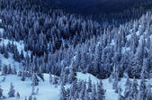 Forest and mountain in the winter — Stock Photo