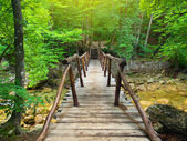 Bridge in bright forest — Stockfoto