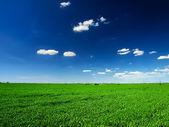 Campo e céu nublado — Foto Stock