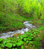 River among grass and stones — Foto Stock