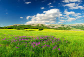 Green field in the mountain valley — Stock Photo