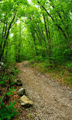 Road in the green forest — Stock Photo