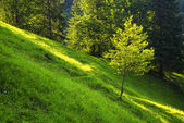 Tree in  forest — Stock Photo