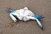Dead crab — Stock Photo