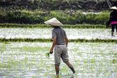 Farmer in China — Stock Photo