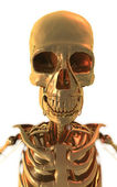 Anatomy - Golden Skeleton — Stock Photo