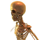 Golden Skeleton — Stock Photo
