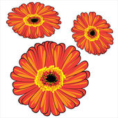 Red vector gerbera isolated on white background — Vetorial Stock