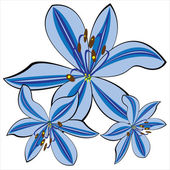 Blue vector lily isolated on white background — Stock Vector