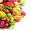 Tulips Mix Rainbow Colours on Left White Background Flat — Stock Photo
