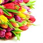 Tulips Mix Rainbow Colours on Left White Background Flat — Stock Photo