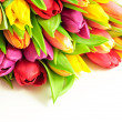 Tulips Mix Rainbow Colours on White Background Flat — Stock Photo
