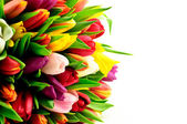 Rainbow Tulips Mixed — Stock Photo