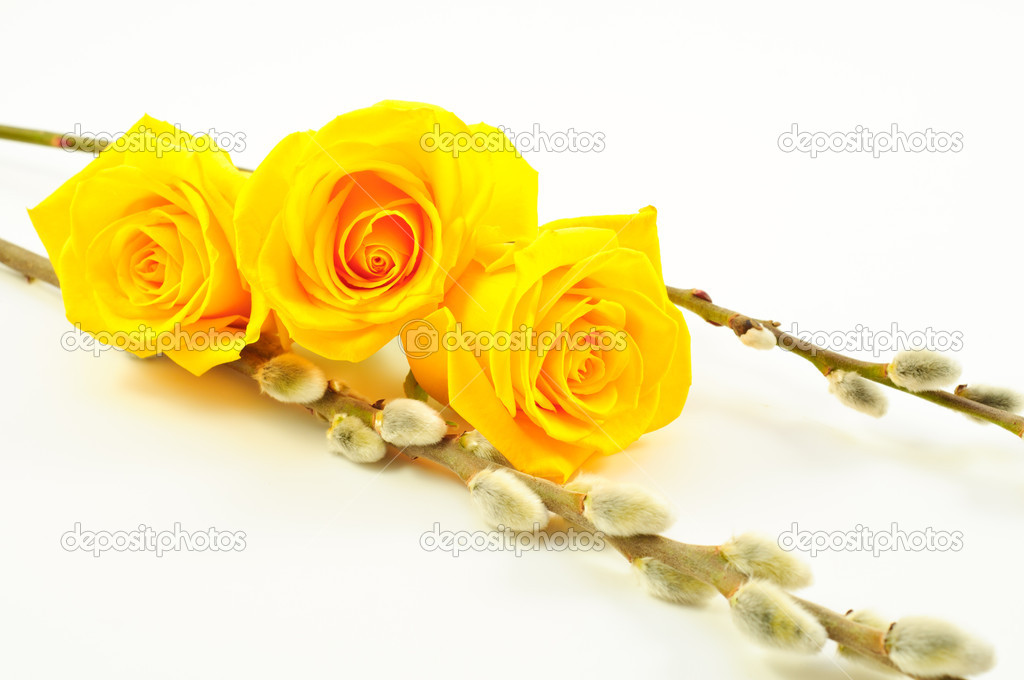 Three Yellow Roses with Willow Branches � Stock Photo � ErwinPlug ...
