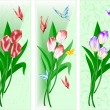 Three songs with a bouquet of tulips - Image vectorielle