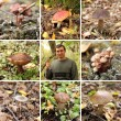 Mushroom Collage — Stock Photo