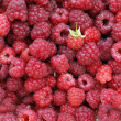 A beautiful selection of freshly picked ripe red raspberries — Stock Photo