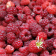 A beautiful selection of freshly picked ripe red raspberries — Stock Photo #28802917