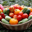 Freshly picked vegetables on basket — Stock Photo