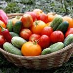 Freshly picked vegetables on basket — Stock Photo #31085531