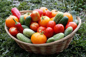 Vers geplukt fruit mand — Stockfoto