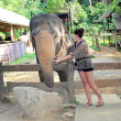 Woman and elephant in Thailand — Stock Photo
