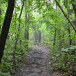 Forest in The Mist With Old Dirt Path — 图库照片