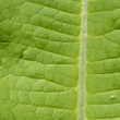 Green Leaf Macro View On Veins — Stock Photo